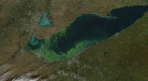 Lake Erie Algae Blooms Cover West Basin
