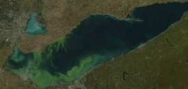 Lake Erie Attacked By Algae Blooms